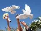 Фотография в   Согласно русской традиции выпустить птицу в Волгограде 1000