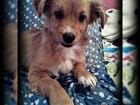 Фотография в Собаки и щенки Продажа собак, щенков Ищет добрые руки щенок. Совсем кроха. Предположительно в Волгограде 0