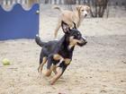 Изображение в Собаки и щенки Продажа собак, щенков В добрые руки пристраиваются три прекрасных в Волгограде 0