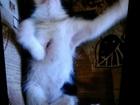 Фото в   Отдам котенка в добрые руки. Заберите пожалуйста в Волгограде 0
