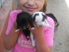 Изображение в Собаки и щенки Продажа собак, щенков Люди очень прошу взять щеночков даром. Люди в Волгограде 0