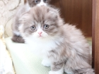 Свежее изображение  Уникальные котята 37220860 в Волгограде
