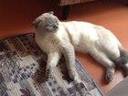 Скачать бесплатно foto Вязка котик приглашает на любовное свидание 37661559 в Волгограде