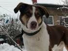 Просмотреть фото  Пропала собака, имя Рэкс, 2 года, окрас рыже-белый 71896247 в Волгограде