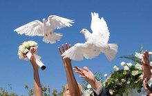 голуби на все мероприятия