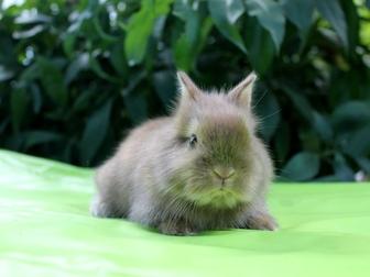 Новое изображение Другие животные Декоративные и карликовые кролики 37272783 в Волгограде
