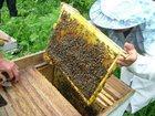Увидеть foto  Пчелосемьи 32505627 в Вологде