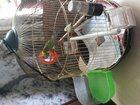 Скачать бесплатно foto Птички продам волнистого попугайчика с клеткой 33093462 в Вологде