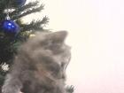Увидеть foto Отдам даром - приму в дар Котята в дар 1 месяц 14 дней 50471944 в Волжском