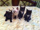Фото в   Отдам красивых котят в хорошие руки, едят в Воронеже 0