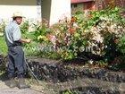 Фотография в Развлечения и досуг Концерты, фестивали, гастроли Ваш сад нуждается в помощи садовник поможет в Воронеже 0