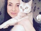 Изображение в   Ищем Британского кота для вязки с нашей британской в Воронеже 1000