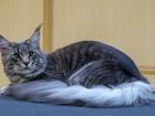 Смотреть foto Услуги для животных Уход за домашними животными, Стрижка собак и кошек, 69050148 в Воронеже