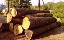 Совместная разработка делянок леса