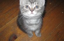 Отдам котенка (девочка)