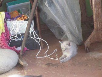 Скачать бесплатно фотографию Отдам даром отдам даром котёнка 33482329 в Воронеже