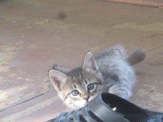 Уникальное фото Отдам даром отдам даром котёнка 33482329 в Воронеже