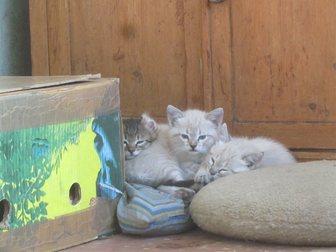 Новое фото Отдам даром отдам даром котёнка 33482329 в Воронеже