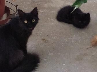 Свежее фото Отдам даром - приму в дар Чудесные котята ищут хозяев 36289891 в Воронеже