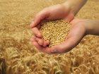 Фото в Домашние животные Корм для животных продам пшеницу, ячмень, овес, комбикорм, в Зарайске 1
