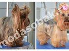 Скачать бесплатно foto Услуги для животных Модные стрижки для собак и кошек 32568911 в Зеленограде