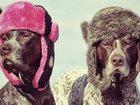 Новое фотографию Услуги для животных Зоогостиница для собак в Зеленограде 32860071 в Зеленограде