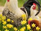 Смотреть foto Корм для животных Комбикорм для кур-несушек 38861871 в Балашихе