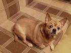 Скачать бесплатно foto Отдам даром - приму в дар Отдам собаку в добрые руки 46507027 в Москве